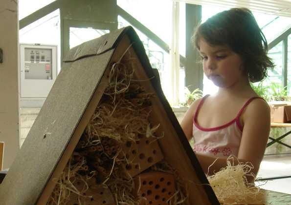 Ботанический сад Берна: строительство домика для диких пчел