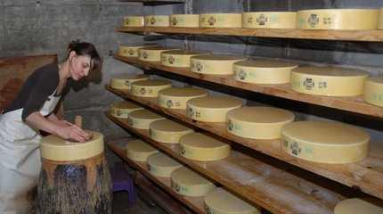 Живая традиция - сыроварение