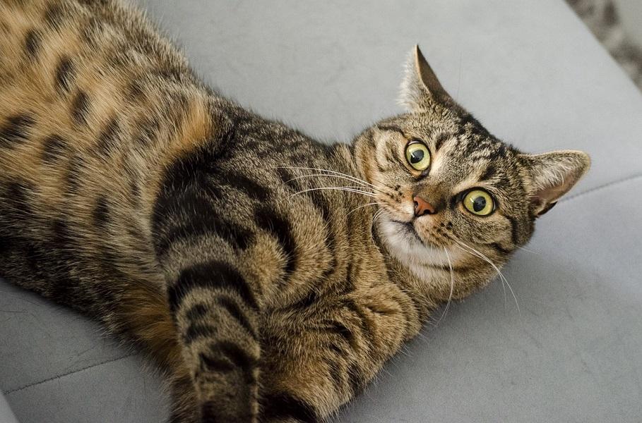Image result for Швейцарцы – поедатели котов